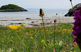 Machair at Traigh Ghael Beach